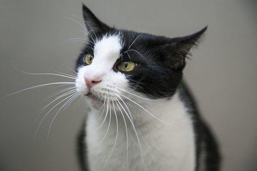 Cat, Feline, Lick, Tongue, Domestic, Pet, Animal, Cute