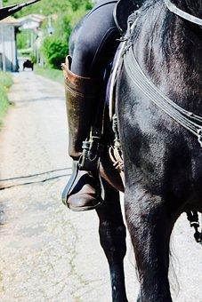 Bracket, Horse, Campaign, Riding School, Riding, Farm