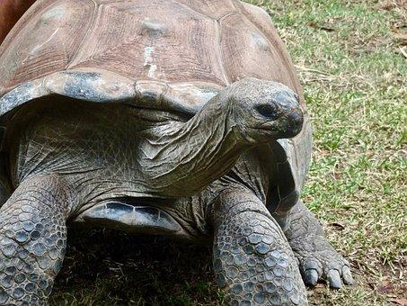 Tortoise, Slow, Large, Giant, Amphibian, Shell