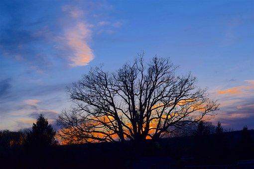Tree, Silhouette, Sunset, Color, Orange, Sky, Nature