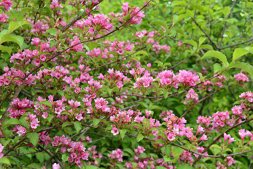 Flowers And Plants, Flowering, Plant, Peach Red