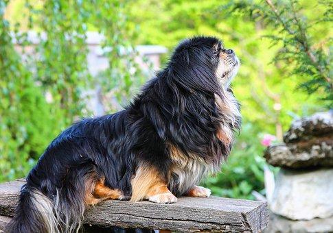 Dog, Portrait, Animal, Pets, állatportré, Sweet