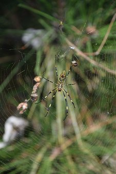 Spider, Cobweb, Nature, Insect, Arachnid, Network