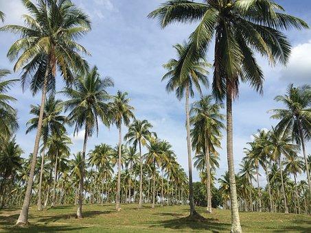 Coconut Garden, The Longest Streak, Beautiful Ensembles