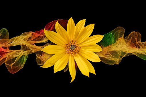 Sunflower, Blossom, Bloom, Particles, Color, Ribbon