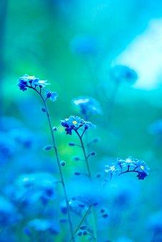Cool, Blue, Buds, Summer, Light, Backdrop, Nature