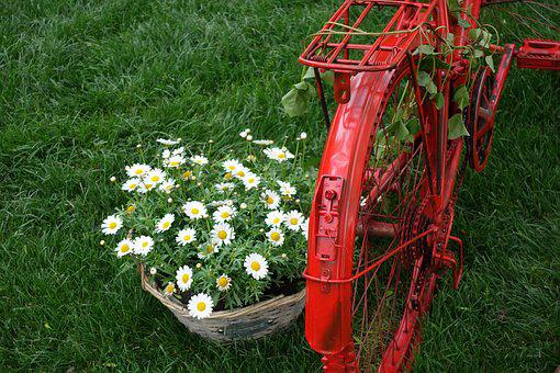 Red Bike, Basket, Daisy, Decoration, Exhibition, Floral