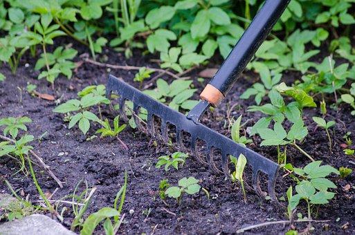 Gardening, Rake, Garden, Tool, Equipment, Springtime
