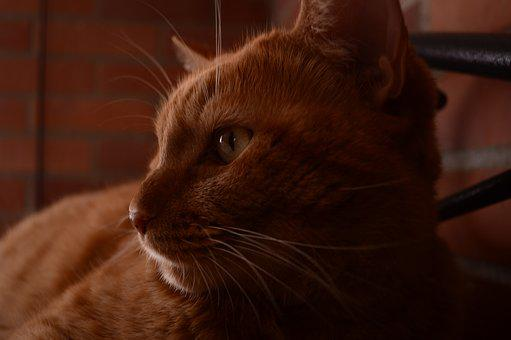 Cat, Natsumi, Feline, Pet, Brindle, Feline Look, Animal