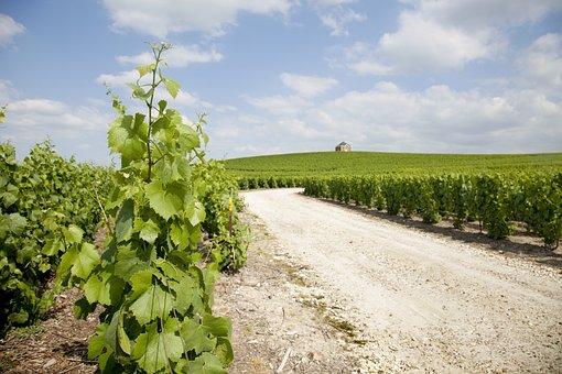 Moët Chandon, Winery, Mount Sharp, Champagne, Oiry