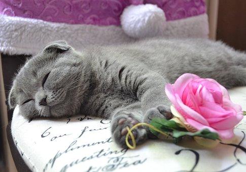 Cat, Kitten, Young Cat, Pet, Animals, Domestic Cat