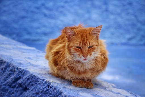 Cat, Animal, Blue City, Kitty, Pets, Friend