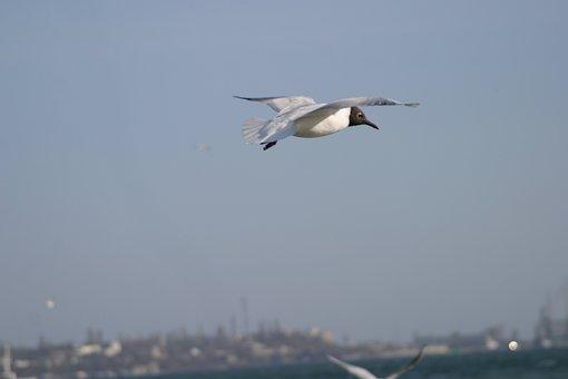 Seaside, Birds, Sunrice, Sky, Blue, Clouds, Blue Sky