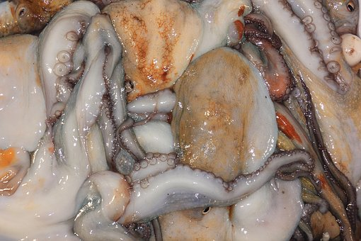 Italy, Favigana, Squid, Seafood, Mixed, Catch, Fresh