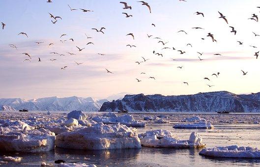 Bay, Ships, Ice, Sunset, Gulls, Evening, Silence, Lull