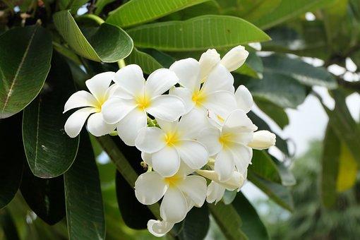 Flower, Tree, Bloom, Spring, Pink, Nature, Blossom