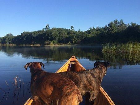 Canoeing, Dogs, Canoe, Boxers, Paddle