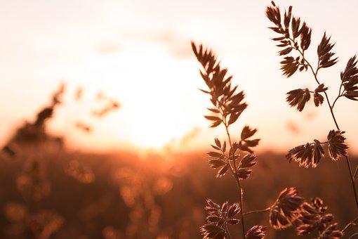 Cereals, Sunrise, Landscape, Field, Morgenstimmung