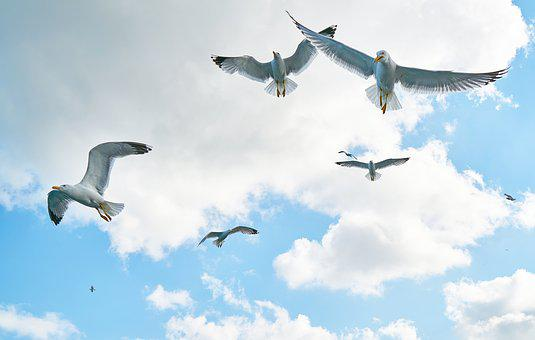 Gulls, Bird, Fly, Loves Nature, Nature, Clouds, Peace