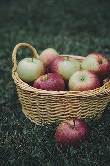 Apple, Apples, Basket, Apple Picking, Fruit, Food