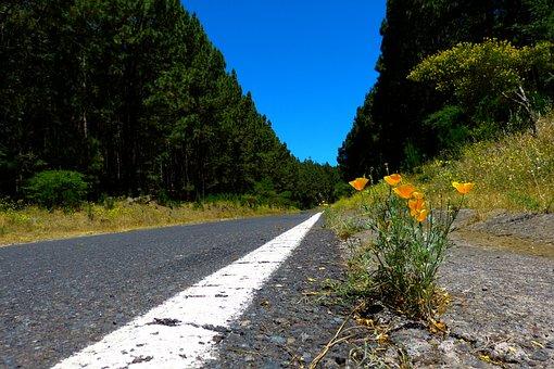 Road, Forest, Tree Lined Avenue, Nature, Asphalt