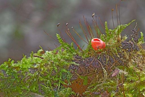 Mushroom, Happiness Mug, Moss, Sponge, Mini Mushroom