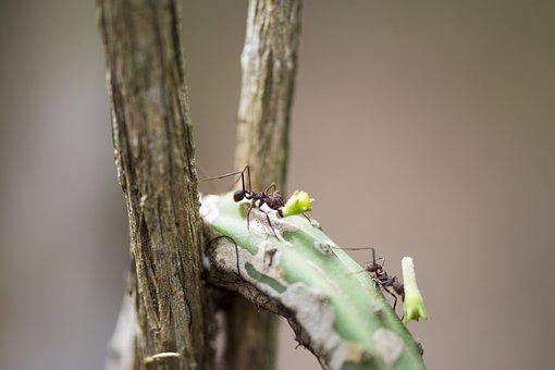 Ant Street, Macro, Ant, Insect, Nature, Wood