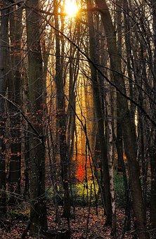Forest, Trees, Morgenstimmung, Sunlight, Landscape
