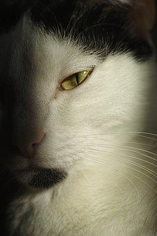 Cat, Animal, Eye, Cute, Animal Portrait, Pets, Overview