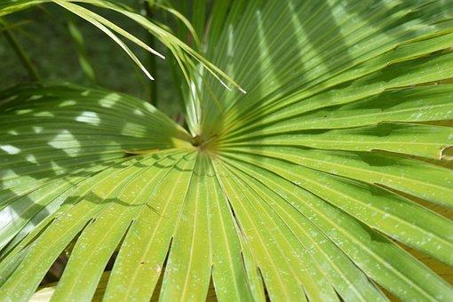 Palm, Plant, Jungle, Tropical, Leaf, Summer, Exotic
