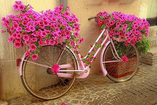 Bicycle, Flowers, Rosa, The Giro D'italia, Color, Bike