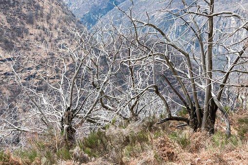 Ticino, Maggia Valley, Chestnut, Trees, Dead Plant