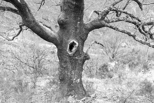 Ticino, Maggia Valley, Tree, Hole, Black And White