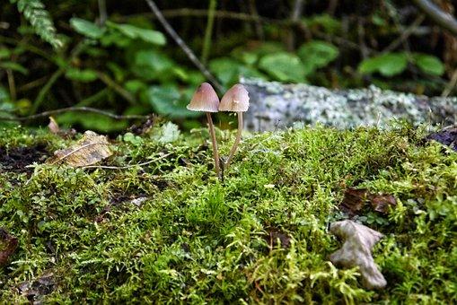 Mushroom, Moss, Stone, Forest, Mushroom Cap, Colors
