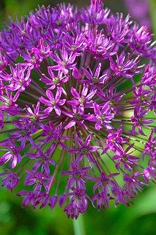 Purple, Flower, Purple Flower, Summer Flowers