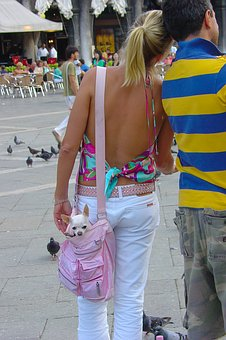 Dog, Chihuahua, Purse, Woman, Couple, Canine, Animal