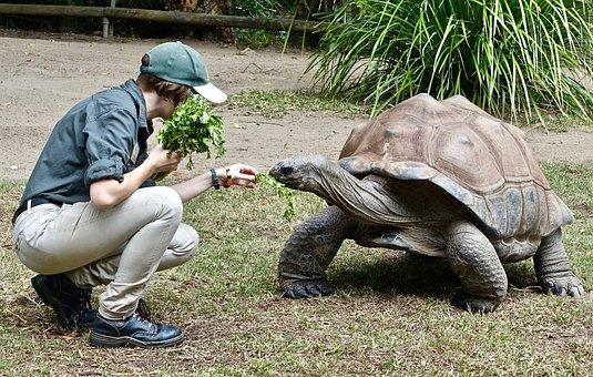 Tortoise, Feeding, Animal, Wildlife, Shell, Giant, Big