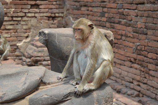 City Of Monkeys, Thailand, Lopburi, Monkeys, Apes
