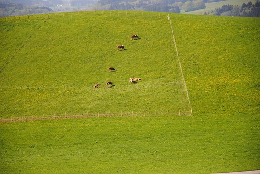 Alm, Pasture, Cows, Chiemsee, Green, Fenced, Cow