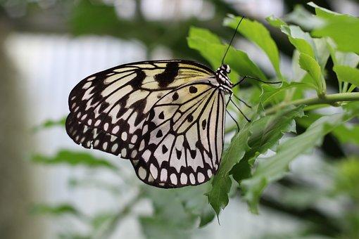 Butterfly, Chess Board, Nature, Garden