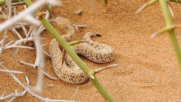 Snake, Africa, Namibia, Landscape, Namib Desert, Desert