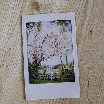 Picture, Instant, Polaroid, Vintage, Photograph