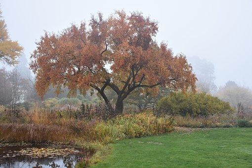 Tree, Autumn, Landscape, Fall Color, Fall Foliage