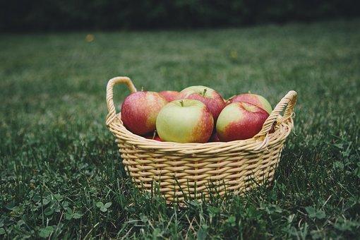 Apple, Apples, Apple Picking, Basket, Fruit, Healthy