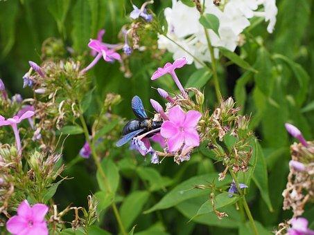 Big Blue Wooden Bee, Blue Black Wooden Bee