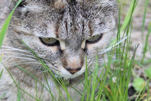Cat, Grass, Lurking