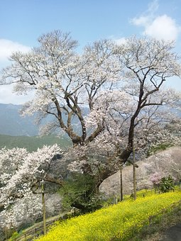 Japan, Kochi Prefecture, Niyodogawa Town