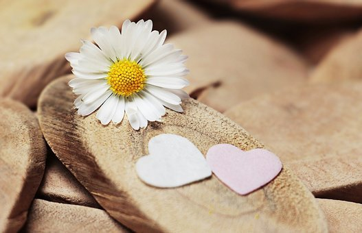 Daisy, Heart, Herzchen, Thank You, Love, Romantic