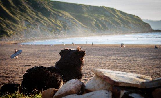Dog, Spain, Beach, Pet, Quadruped, Animal World, Rock