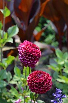 Flowers, Chicago, Botanic Gardens